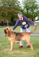 Wistful winning Group 2 at Scottish Kennel Club Championship show 2007