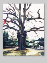 Old Oak in crystal Palace Park 2015