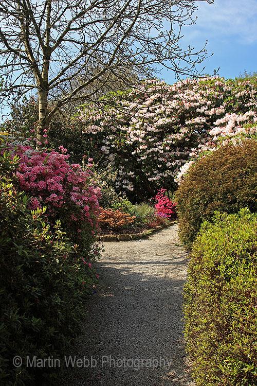 16266A Trengwainton Gardens