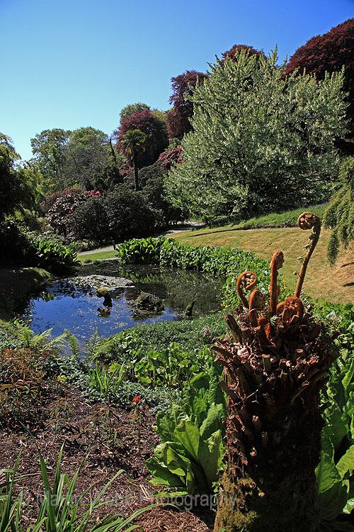 16452A Trebah Gardens