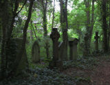 Crosses in forest, Richmond Cemtery