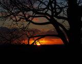 Pembroke Lodge Sunset, Richmond Park