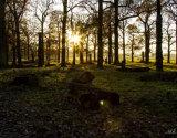 Richmond Park at Dusk