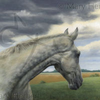 Bill's Mother's Mare