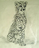 "Young Cheetah 6 1/2"" x 8"" Graphite"