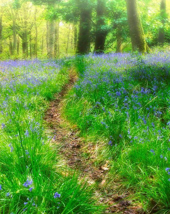 Bluebell Woods, Gartmore