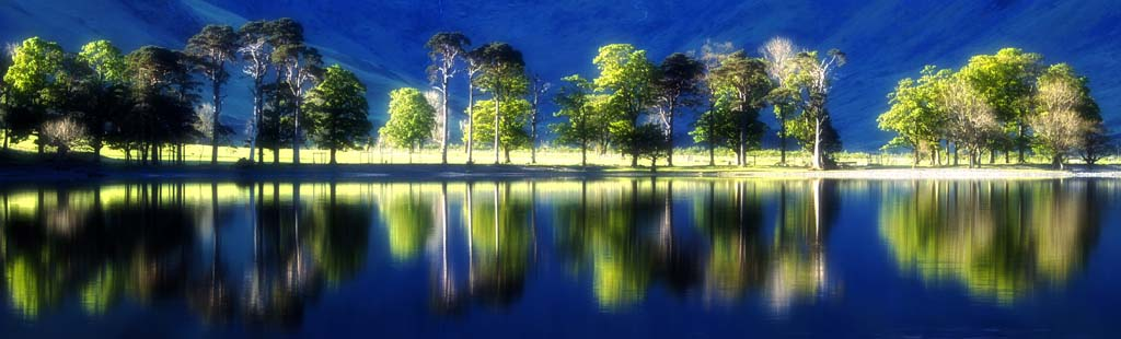 The Scots Pines of Buttermere