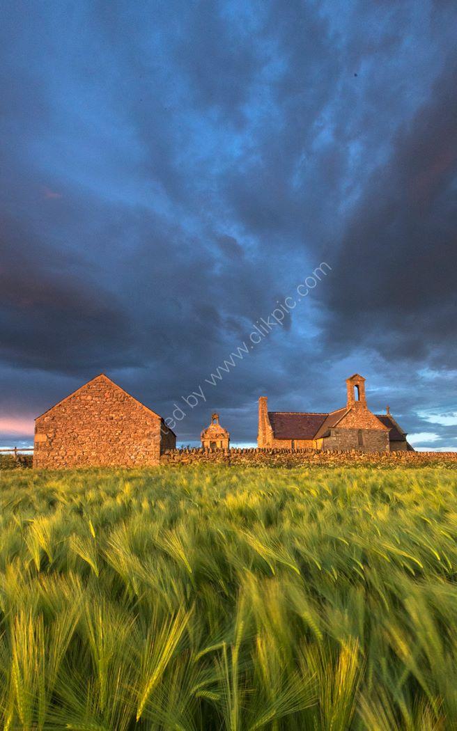 Barley Field 4