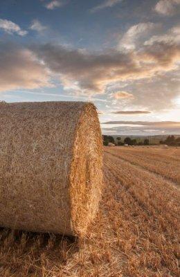 Barly Field Sunset