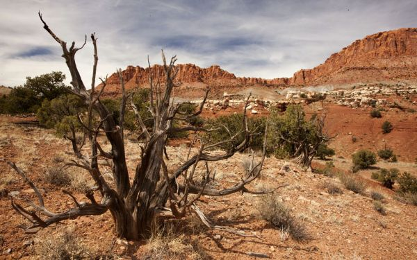 Capitol Reef desert (3)