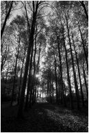 BW Forest to Waylands
