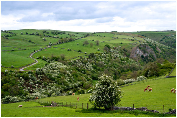 Hawthorn Trail