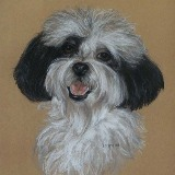 Pastel Dog on Paper