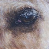 Acrylic Horse close up portrait
