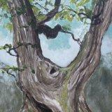 Fonthill Oak 2