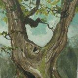 Fonthill Oak 1