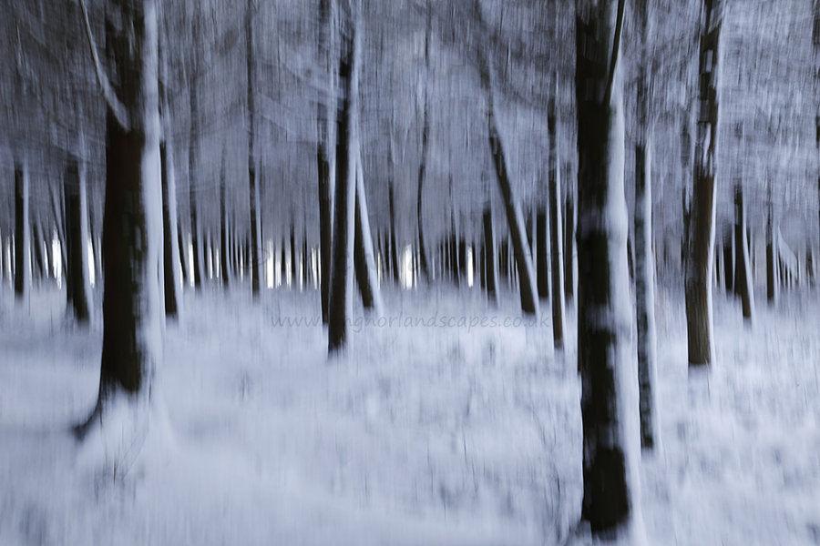 Dark Trees I