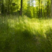 Sunlight Gilded the Grasses