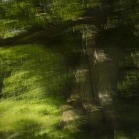 A Doughty Oak Tree