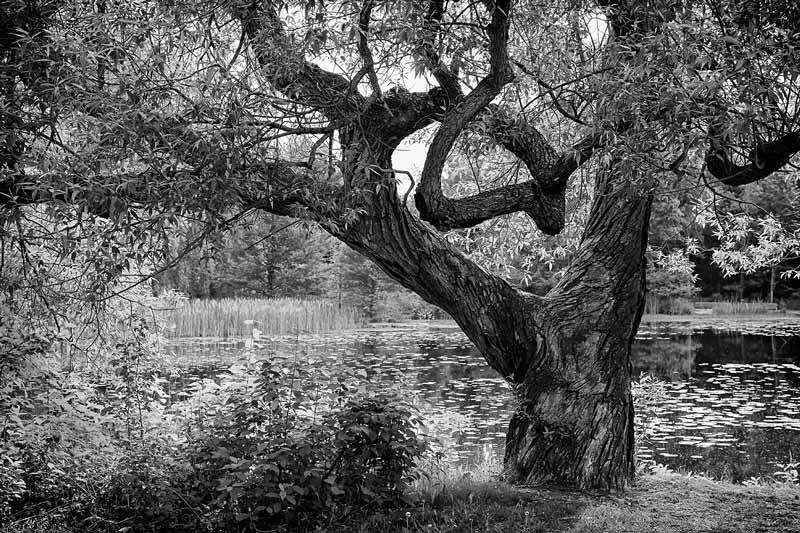 L'arbre et l'étang - noir et blanc