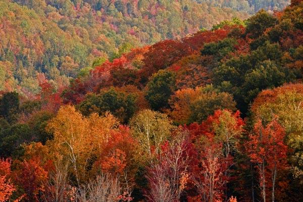 michel bury photographie de nature photography flanc de montagne l 39 automne. Black Bedroom Furniture Sets. Home Design Ideas