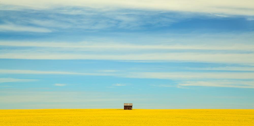 Cabane dans un champs de canola