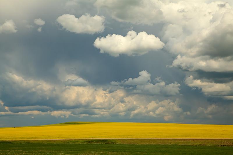 Temps orageux au-dessus d'un champs de canola
