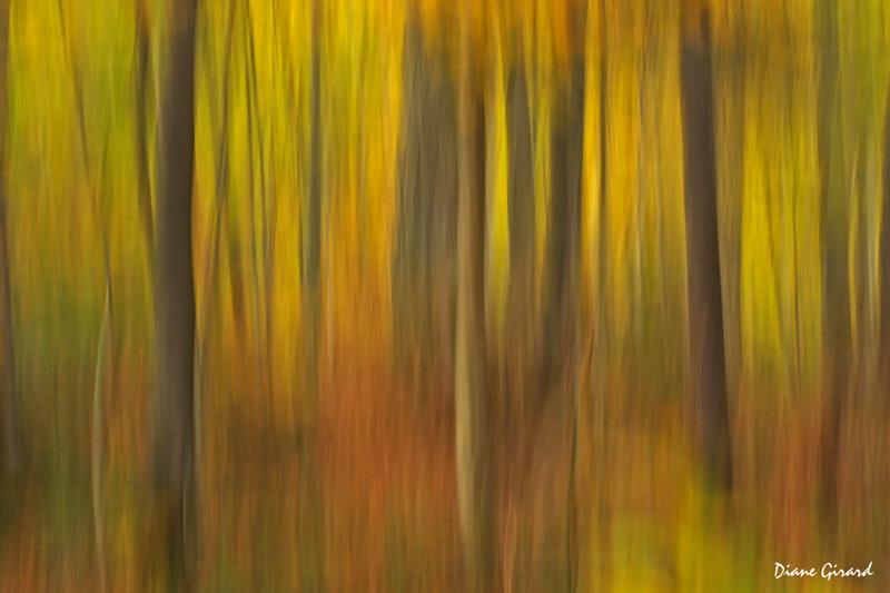 Évocation d'automne