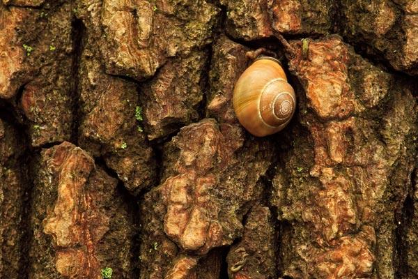 Escargot sur tronc
