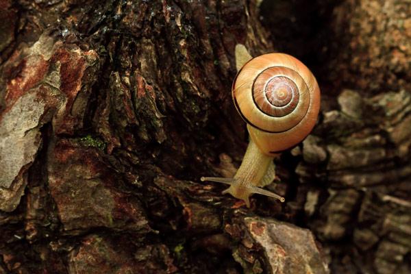 Escargot sur tronc en exploration