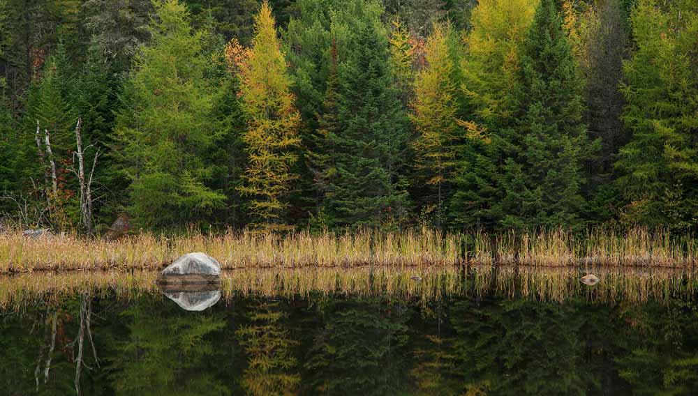 Étang avec rocher et réflexion à l'automne
