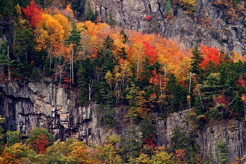 Falaise à l'automne - Détail