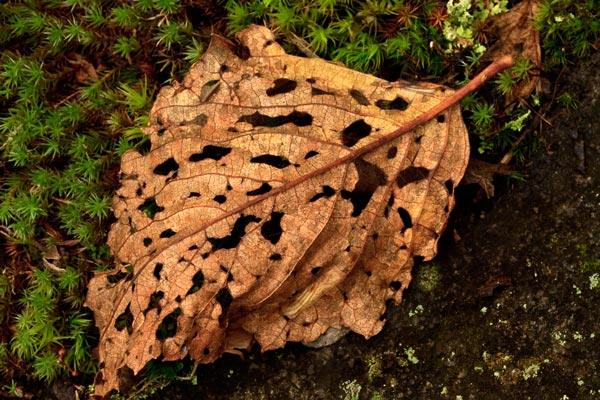 Feuille morte à l'automne