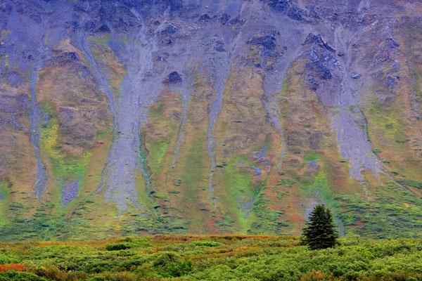 Couleurs automnales dans la prairie alpine