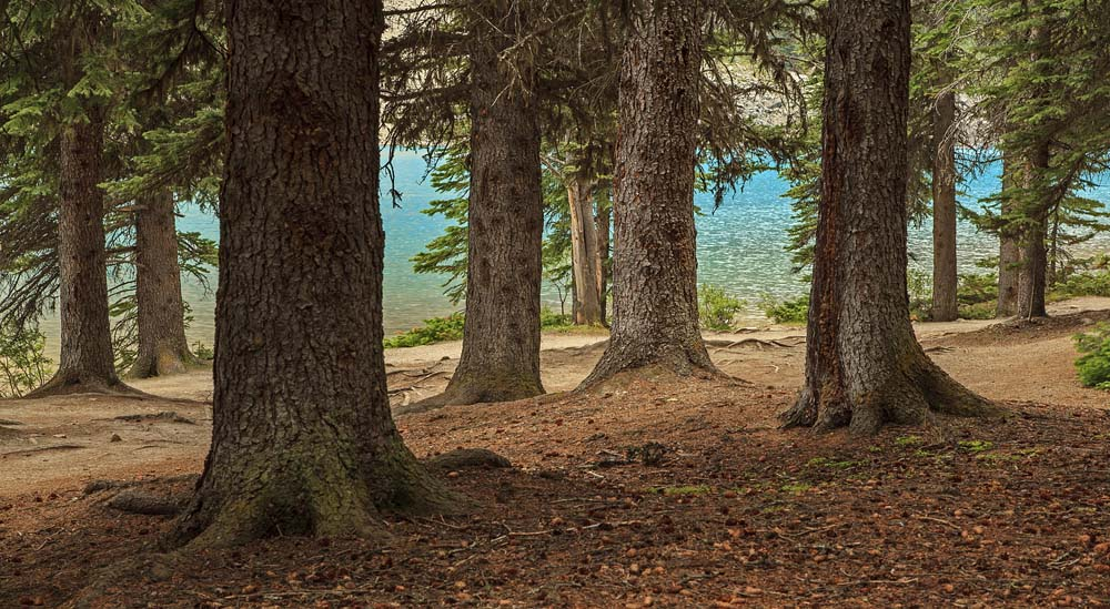 Sentier riverain de Moraine Lake