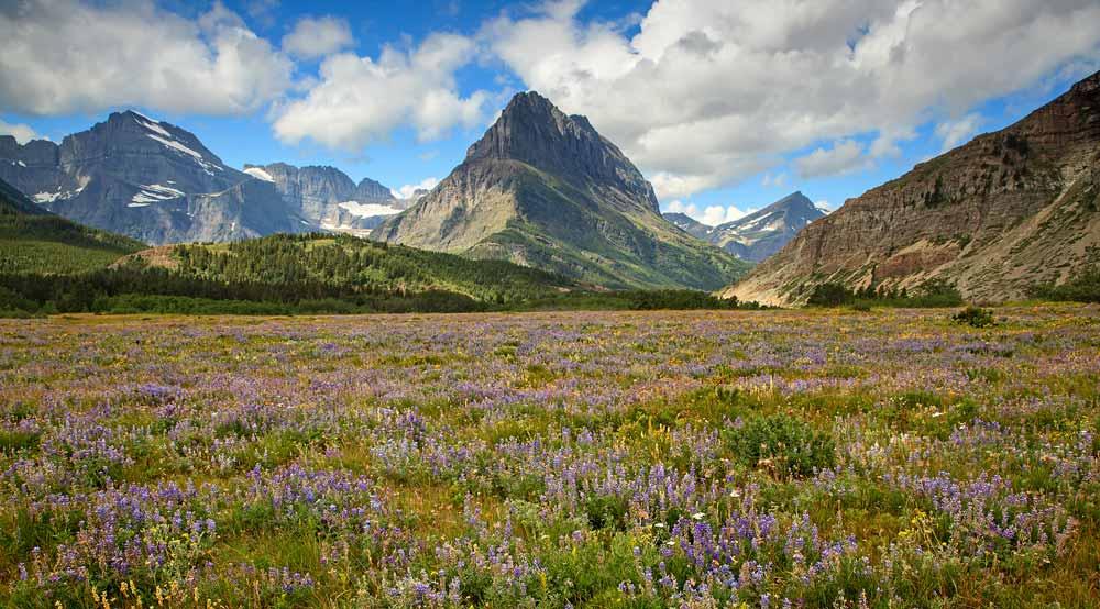 Mont Grinnell et champs de fleurs