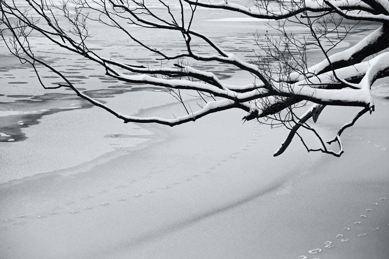 Arbre et rivière en hiver