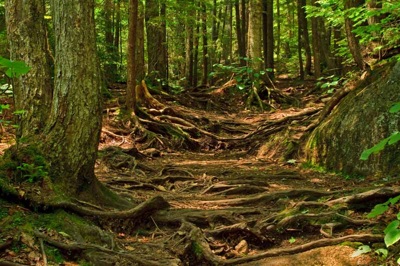 Sentier longeant le ruisseau <em>Cascade Brook</em>
