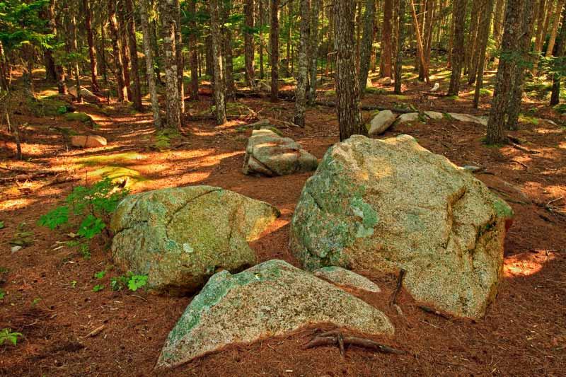 Trois rochers dans un sous-bois