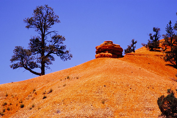 Red Canyon - Dixie National Forest, Utah