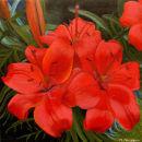 'Anne-Maries Garden'