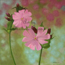 Sweet Sea Campion