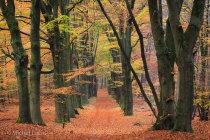 Herfstbos bij Doorwerth, Veluwe