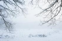 Winterlandschap, Overasseltse en Hatertse Vennen
