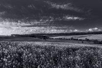 Landscape 2 Saffron Walden