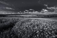 Landscape 1Saffron Walden