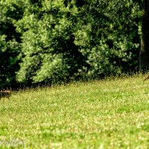 Fox Dawn Patrol