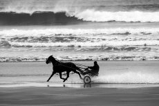 Sulky cart, Inchydoney, West Cork