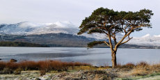 Tree and mountains, Killarney, County Kerry