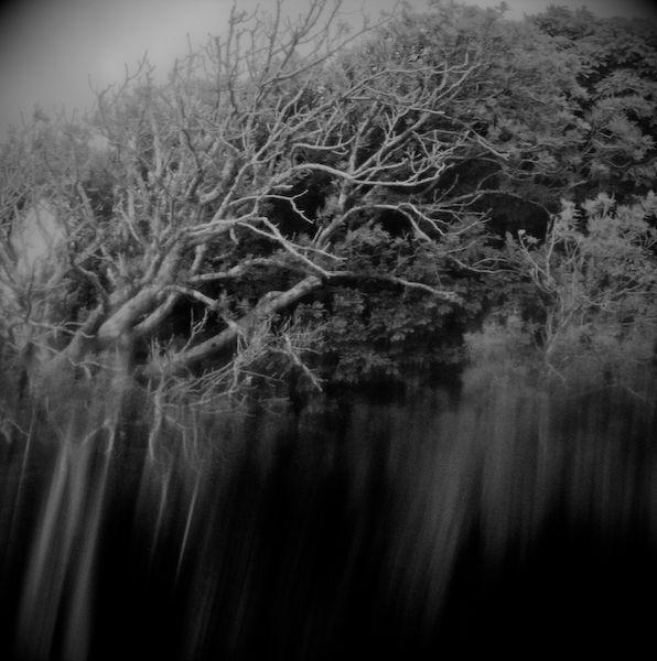 Brunel's Tree